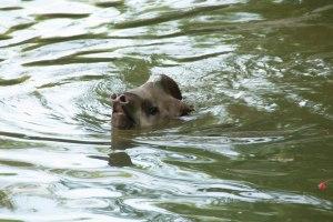 Gigi having a swim