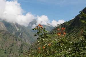 Trekking through rhododendron forests in Langtang